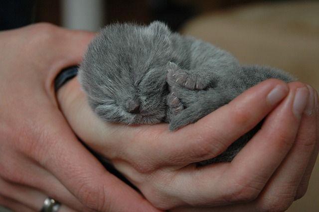 15 Of The Most Adorable Newborn Animals Newborn Animals Newborn
