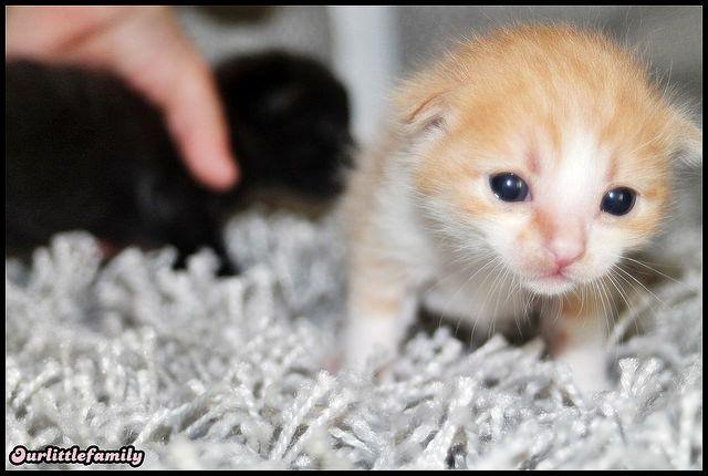 petits chatons photographier via un canon eos 1100d