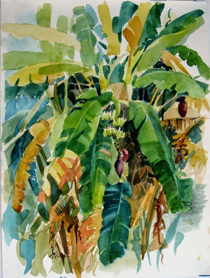 Bananeira                                                                                                                                                                                 Mais