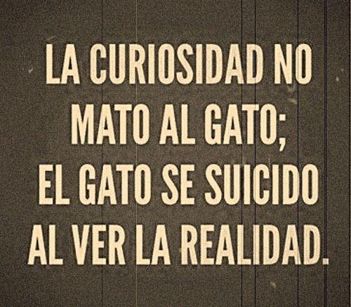 La curiosidad no mato al gato...