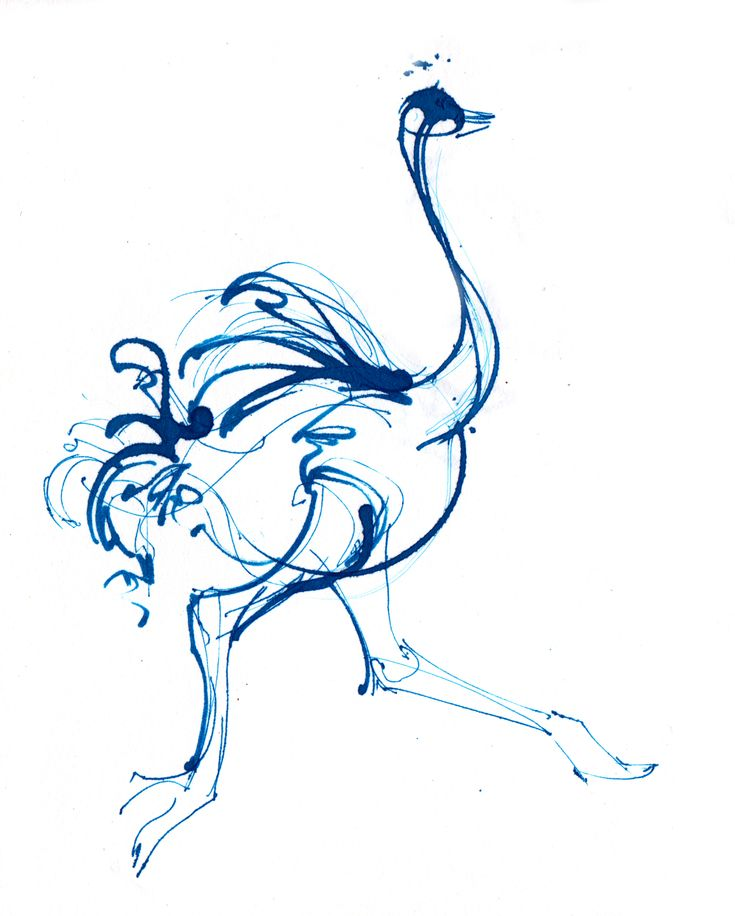 Ostrich in ink - running super fast! - Sketchbook – Crystal Smith - Check out the sketchbook for more! #sketch #sketchbook #drawing #draw #art
