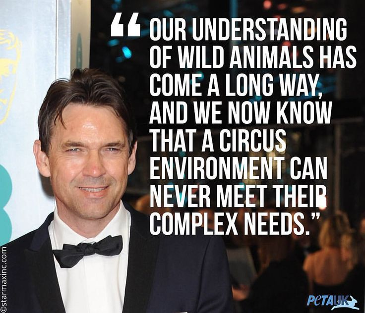 Dougray Scott calls on Scotland to ban wild animals in circuses. DOUBLE TAP if you agree and visit http://petauk.org/b502 to take action. The Scottish star wrote: Fortunately, it's been years since any circus tried to palm off beaten-down animals on the Scottish public, so it should be easy for our government to make a ban official. A permanent prohibition on animal circuses in Scotland would send a powerful message without affecting the local economy. Austria, Belgium, Croatia and Estoni...