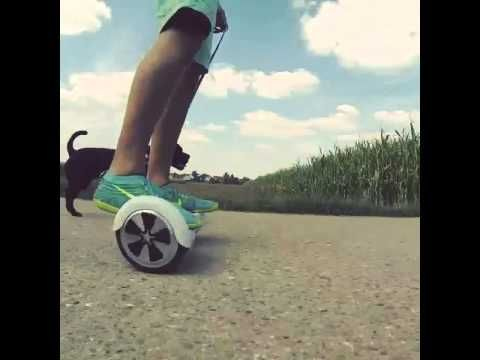 The new and improved way of walking your dog.This white board is available at www.bravearscooters.com Get more fun in your life .Shop it now !!! #fun #walkdog #hoverboard #bravearscooters #twowheel #sale #wholesale