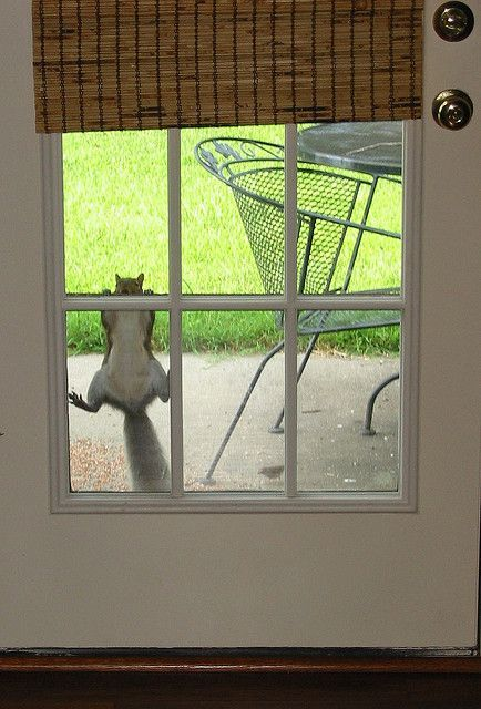 """Squirrel: """"What's up with you 'Human?' You haven't put the nuts in the bird-feeder yet! And it's already 9 a.m. Honestly!"""""""