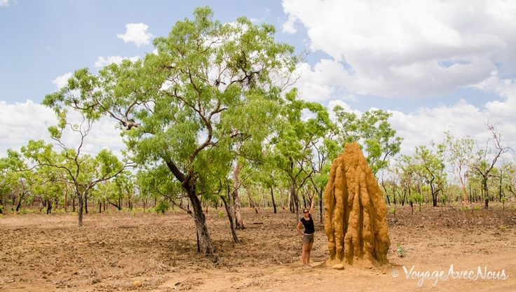 fourmilliere-geante-australie