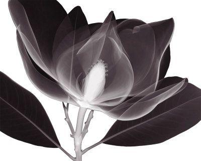 Foto di Fiori & Botanica in bianco e nero Stampe d'arte su AllPosters.it