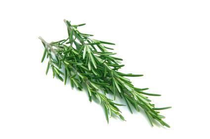 Rosemary, among other herbs, can work as a natural flea treatment. There are several ways to use it, including a powder, rinse, or even an oil applied to the collar.  Good to know, for Burundi.