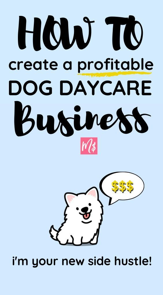 How To Work From Home Creating A Profitable Doggy Day Care Dog