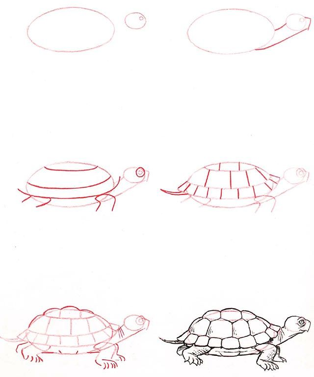 how to draw a turtle | Click here for a full list of all the animals you can learn to draw  Turtle (。•ω•。)
