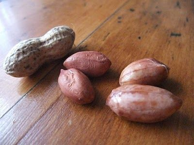 Peanuts -   DIY - How to easily grow peanuts from raw peanuts you can buy in a grocery store.  Pictures of every step in growing a peanut plant, from using just the raw peanuts you would buy in a grocery store.