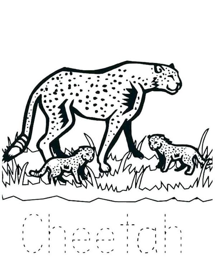 Cheetah Coloring Pages Preschool (With images) Zoo
