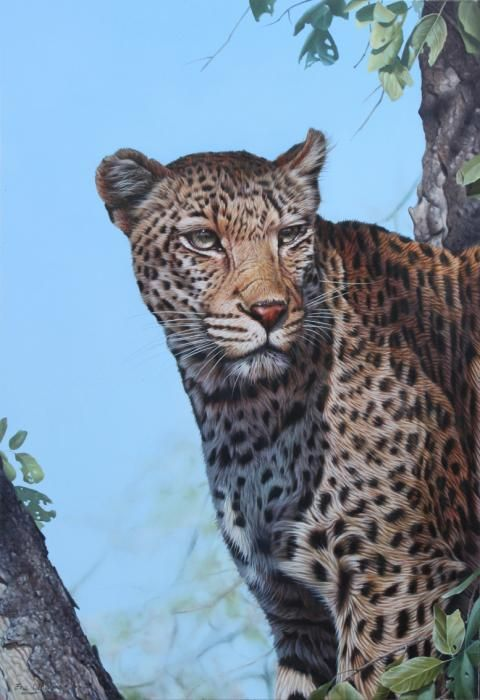 South African Leopard Painting by Eric Wilson - South African Leopard Fine Art Prints and Posters for Sale