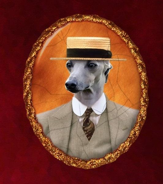 Gentleman Italian Greyhound