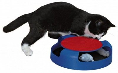 Zabawki dla kotów - Allegro.pl