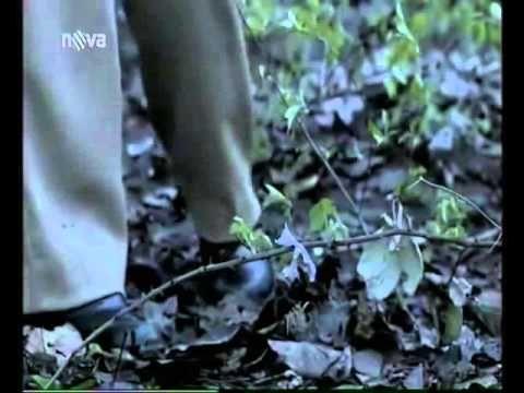 Tajné životy CZ celý film, český dabing, 2005, drama, mysteriózní, thriller - YouTube