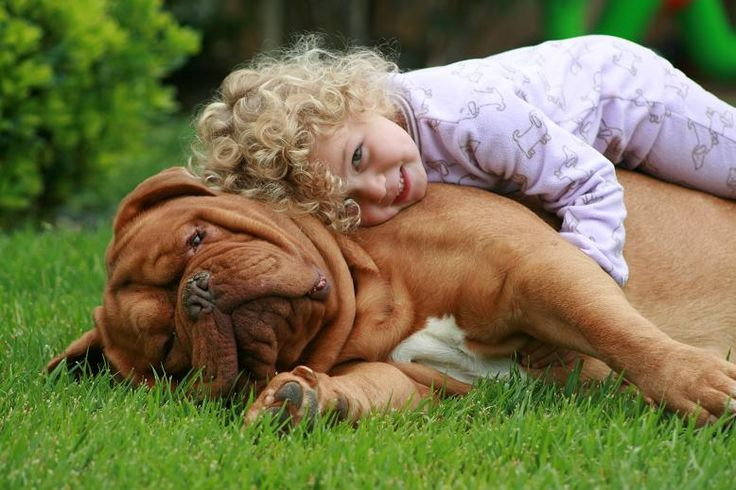 Dogo de Burdeos =)