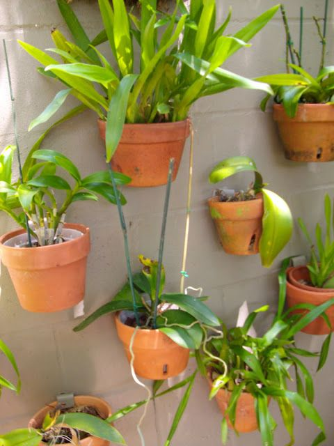 The Rainforest Garden: Off the Wall Ideas for Orchids on the Walls