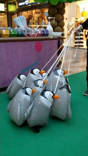 Pingviinipallot seuraa johtajaa. Kävelevät pallot ovat kiinnostava erikoisuus