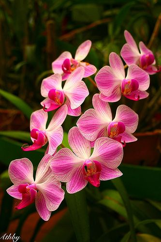 Orchids - one of the most beautiful flowers - symbolize the Divine Feminine aspect of Twin Flame love.