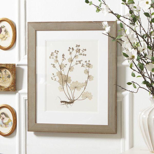 Birch Lane Pressed Botanical Framed Print Collection