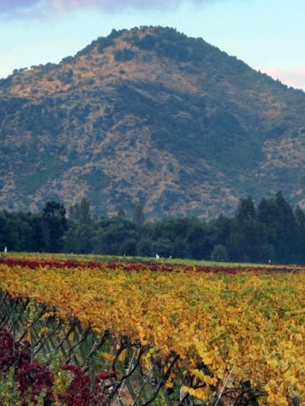 Colchagua Valley Experience: 1-day wine tour #Chile