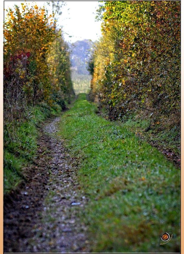 Beauval-en-caux, Beauval-en-Caux, France — by France Normandie. forest walk
