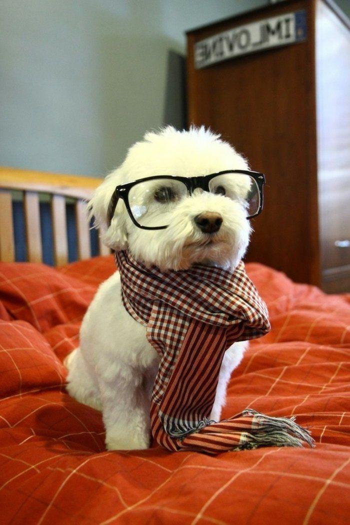 kleines-Hund-Hipster-Brille-kariertes-Halstuch-süß-kokett