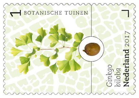 Ginko biloba - Botanische tuinen