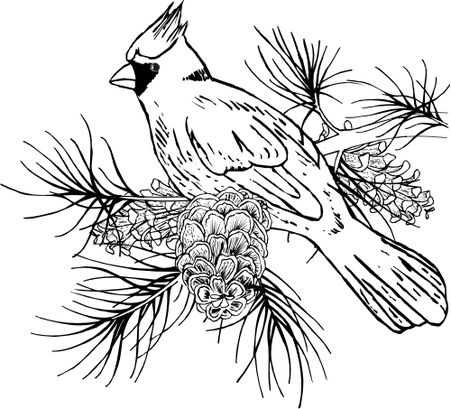 Cardinal On Branch 856m Bird Coloring Pages Wood