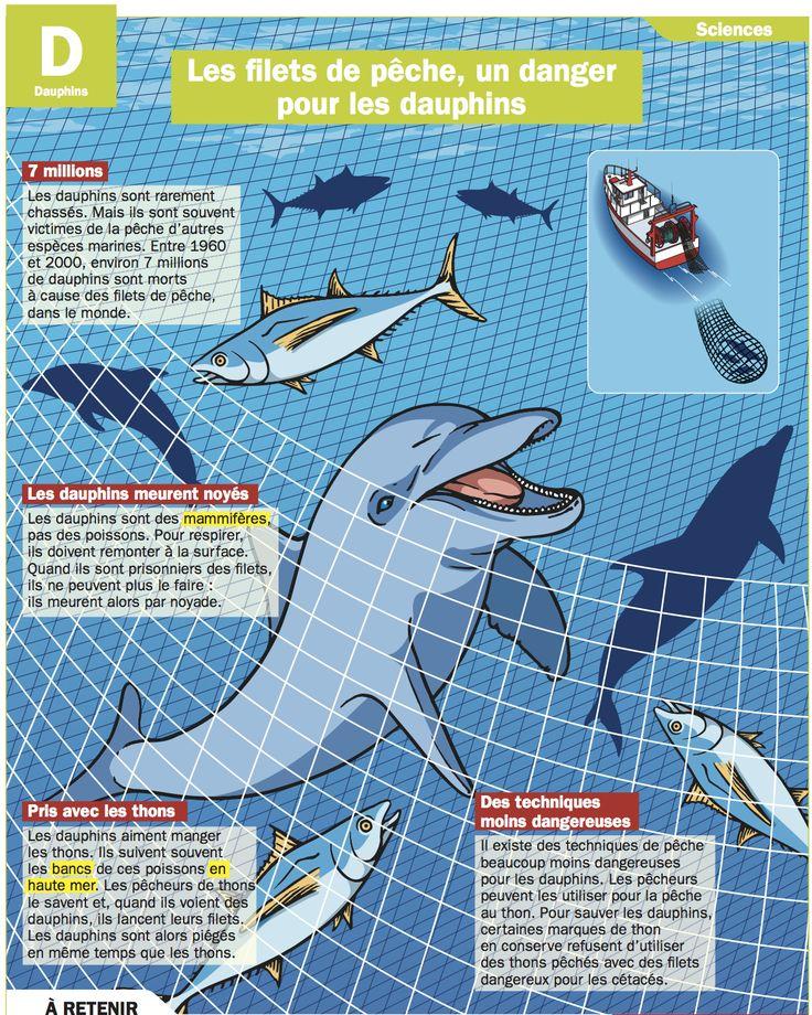 les filets de p che un danger pour les dauphins pinterest animaux. Black Bedroom Furniture Sets. Home Design Ideas