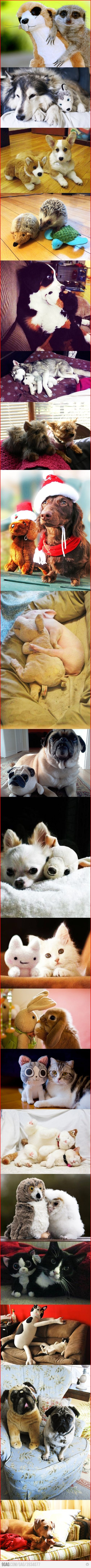 Cute animals and their cuddly counterparts. Does it get any cuter than this? No, it doesn't