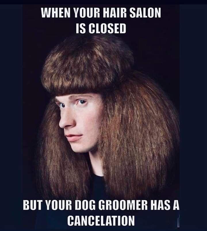 Lmao In 2020 Hair Humor Jokes Pics Dog Groomers