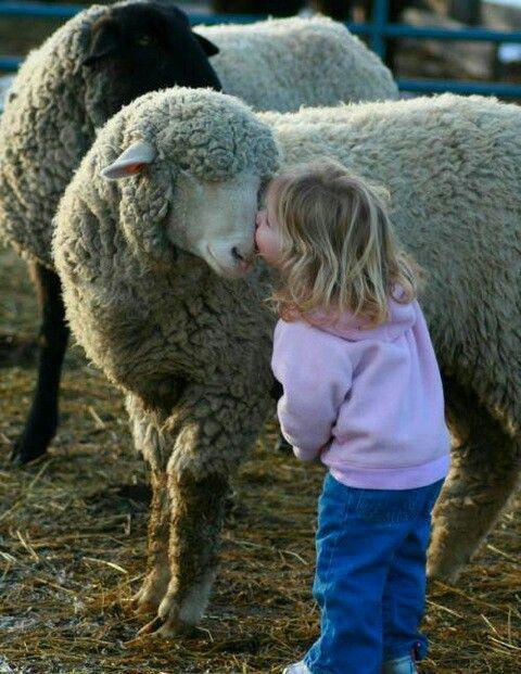 Cute kid and sheep