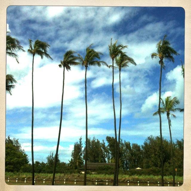 driving by Baldwin Beach Park, Paia HI