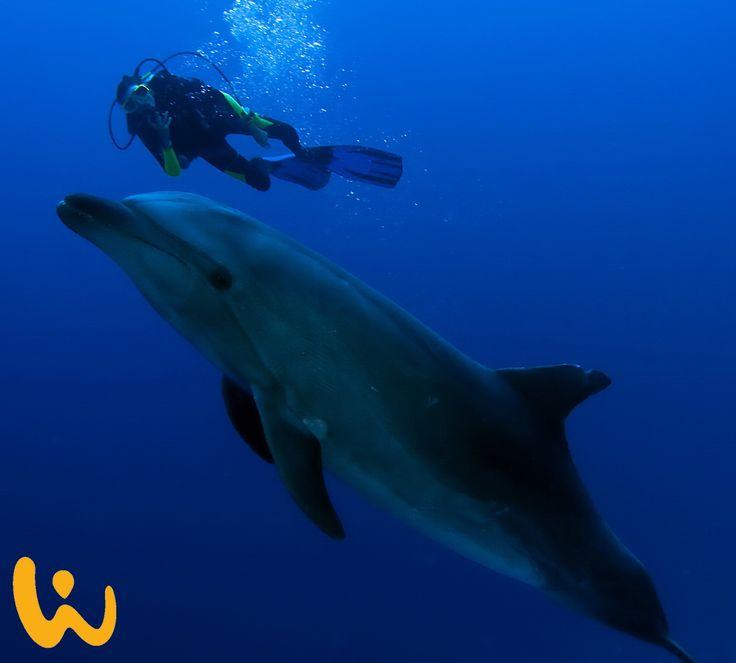 Ich sag nur: Der Kindertraum ♥ #delfine #wasser #meer #blau #tauchen #wasserblasen #lebedeinleben #kindertraum #wirodive #touchedbynature #tauchreisen #sonne #erlebnisreisen #weltweit