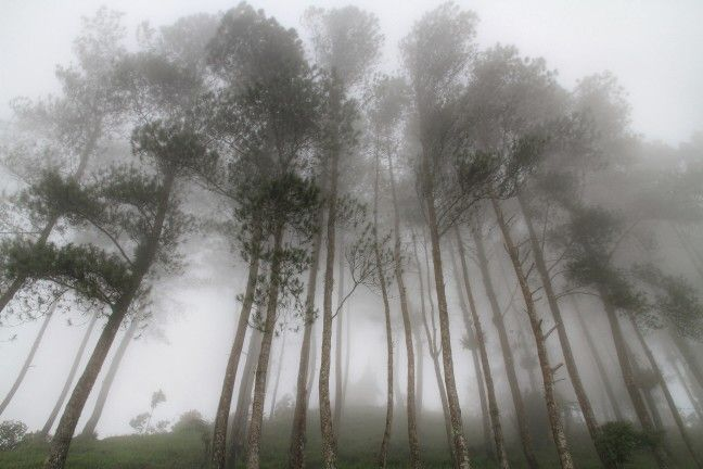 Misty Forest at Puncak Lawang, West Sumatra. Indonesia