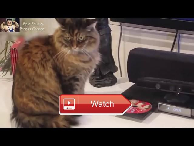 😸 FUNNY CATS FIGHTING WITH DVD PLAYERS So Cute 😼 😽 from Pet Lovers 😻
