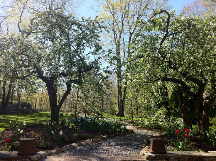 Garden Design By Carolyn Mullet 239 best garden design ideas images on pinterest | garden design