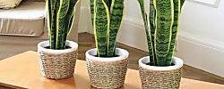 Algunos DIY muy sencillos que nos ayudan a decorar nuestra casa de una forma low cost. ¿Cúal te gusta más?