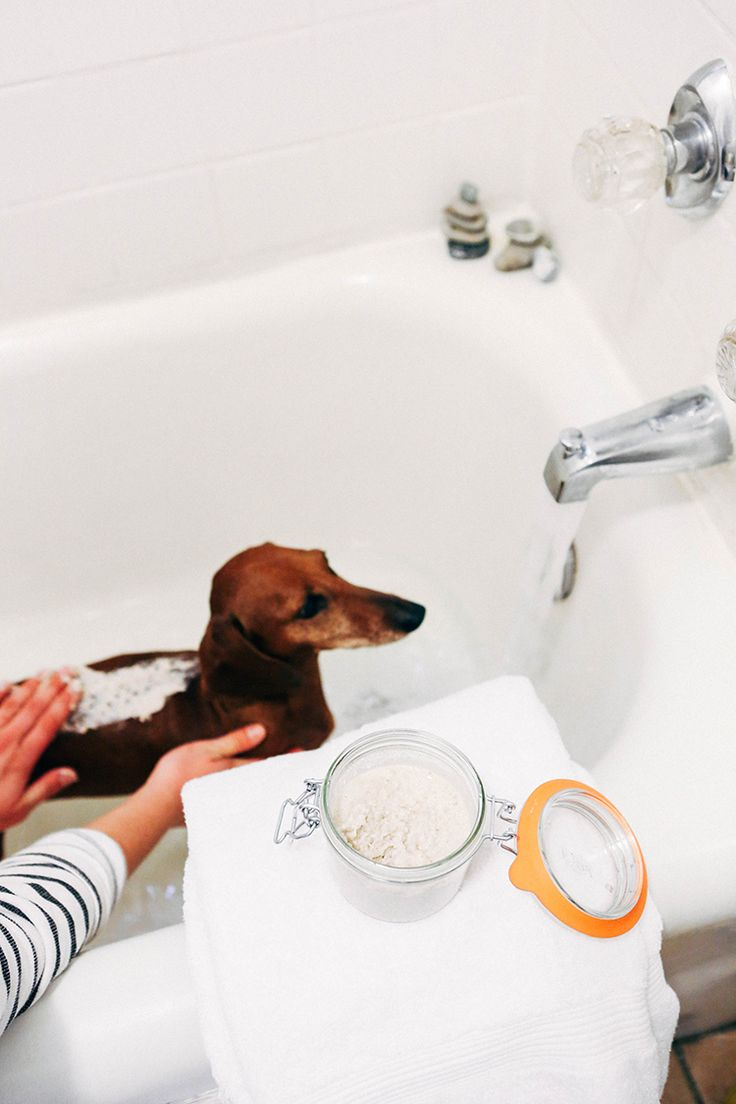 65 best natural pet care images on pinterest doggies pets and diy natural pet spa solutioingenieria Choice Image