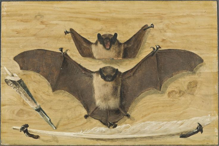 """Trompe l'oeil: Two bats nailed to a timber wall, knife and quill pen (""""The Bat Painting"""") 