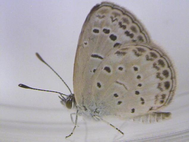 Many of the affected butterflies near the Fukushima plant in Japan exhibited abnormalities in their antennae, abdomens and legs.