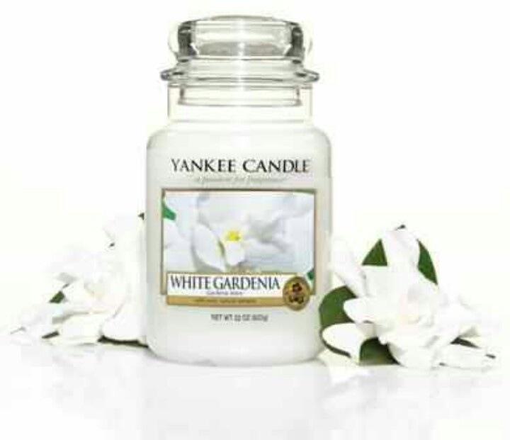 White Gardenia - Så fängslande ... denna fantastiska kungliga skönhet. Den grönskande vita Gardenian i full blom. Vit Gardenia sprider ren vårglädje.