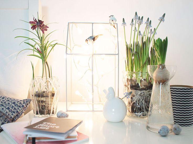 17 best Frühlingsdeko Ideen images on Pinterest | Garten, Right guy ...