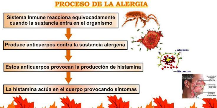 La alergia nasal o rinitis alérgica, es la inflamación de las membranas mucosas de las fosas nasales y de los senos para-nasales. Esto se debe a que la nariz es la primera barrera de la que dispone el organismo para poder evitar el ingreso de varios alérgenos que se encuentran en el aire que se respira. aler La rinitis alérgica se caracteriza por los repetidos estornudos en serie, por la picazón de la nariz, rinorrea, que es la secreción nasal que suele ser abundante, y la obstrucción nasal…