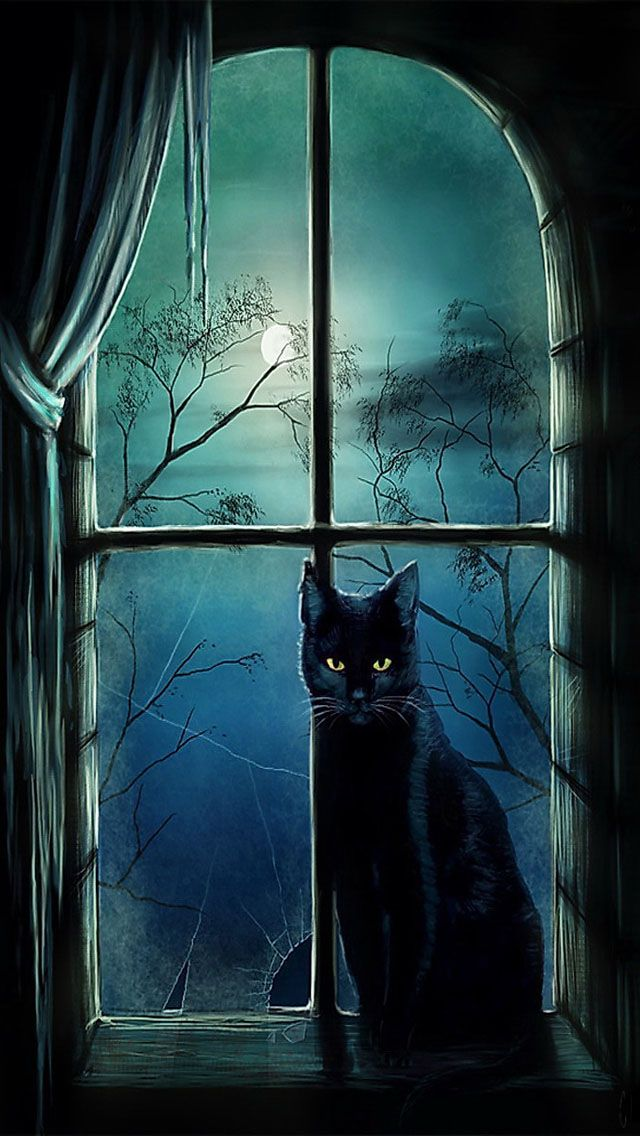 iphone wallpapers background - black cat in window at night full moon