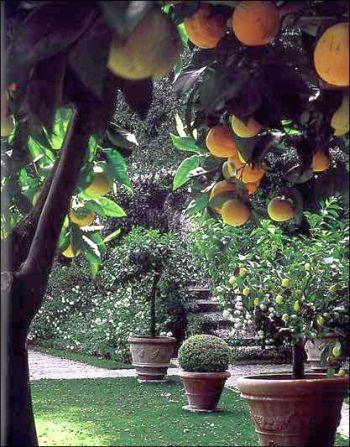 <3: Gardens Ideas, Container Gardens, Tuscan Gardens, Landscape Design, Terracotta, Fruit Trees, Orange Trees, Tuscany Italy, Gardens Plants
