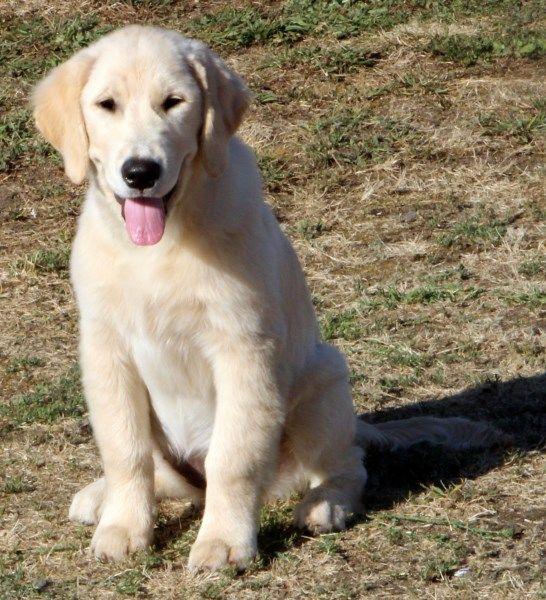 Self training service dog