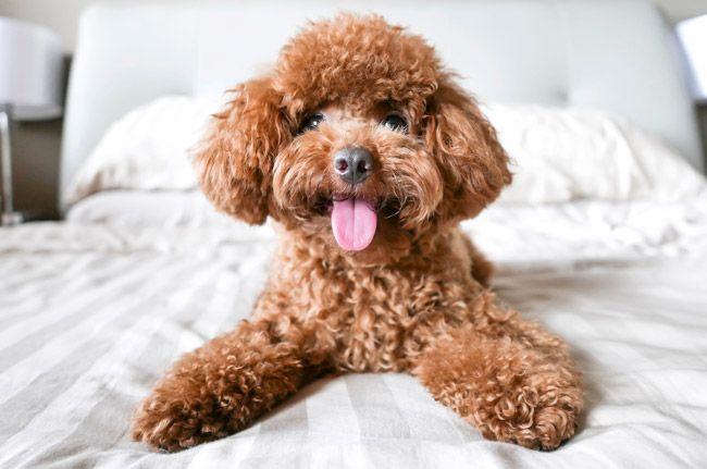 Hunde Fur Senioren Die 10 Besten Hunderassen Fur Alte Menschen
