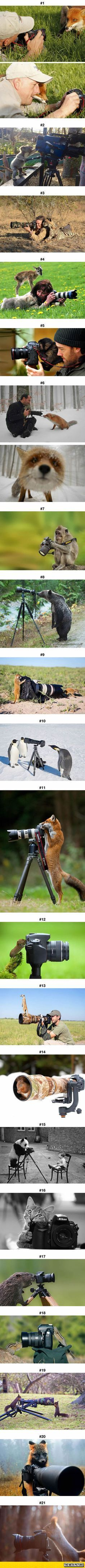 Animals That Want to Be Photographers This is how real men and women shoot animals